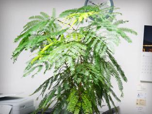 観葉植物③