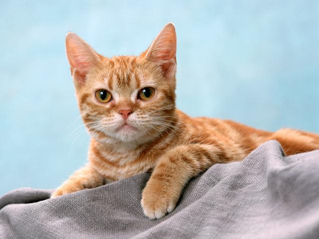 ペット猫写真撮影